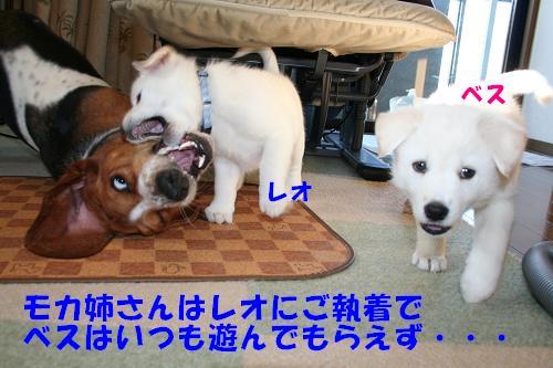 f0121712_16415676.jpg