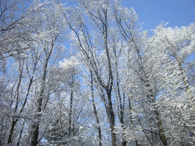 雪、雪、雪_f0111415_13354314.jpg