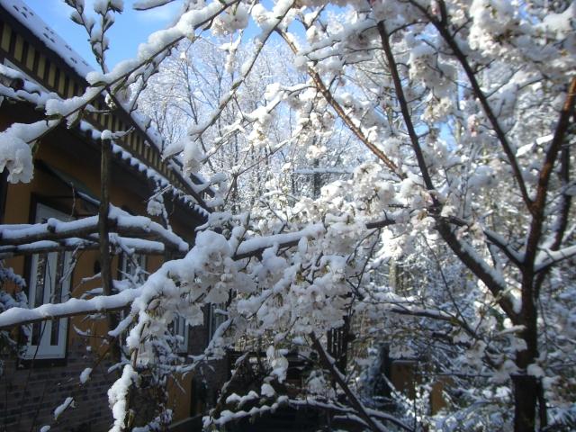 雪、雪、雪_f0111415_13372566.jpg