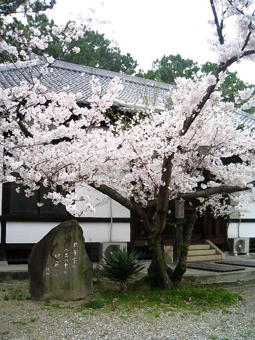 太子堂とその前の桜。太子堂は、方三間、一重、宝形造りの建物の前に一間の縋破風をかけ、奥行き一間の礼堂をつけたもので四方を縁ではりめぐらしています。全体として藤原建築の美点を遺憾なく発揮しバランスの富んだ建物です。