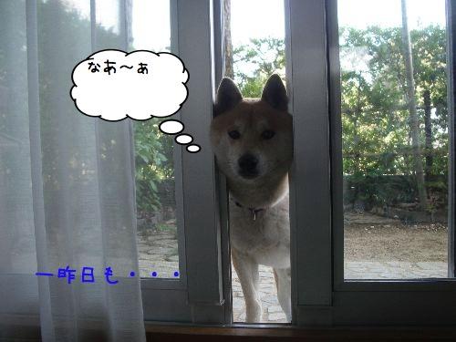 f0083432_20115287.jpg