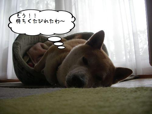 f0083432_20121647.jpg