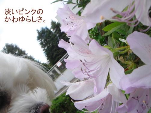 f0087044_16122592.jpg