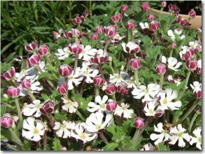 4月19日かわいい花