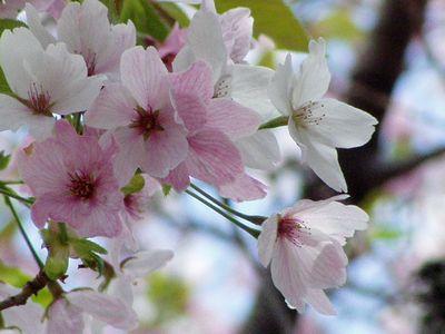 桜色、萌黄色。_f0012154_20581920.jpg