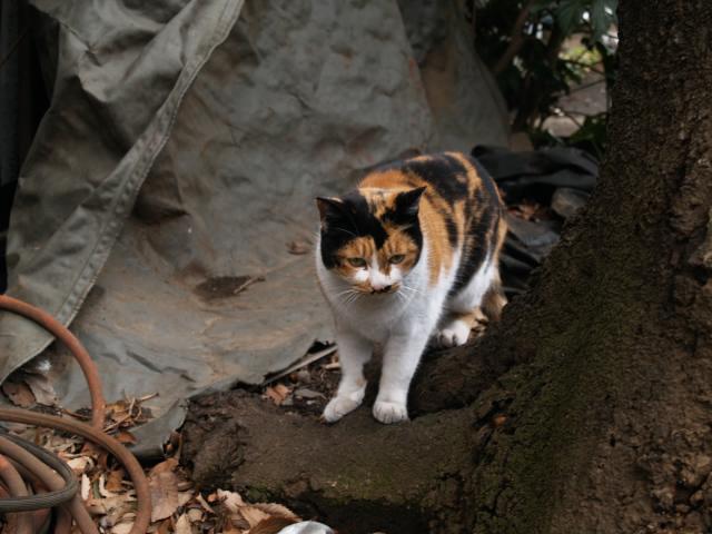 経堂スタイル 近所の野良猫_f0024992_842747.jpg