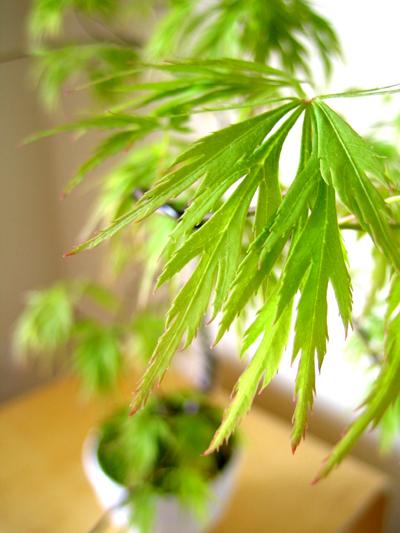 盆栽教室 2回目_d0028499_20132516.jpg