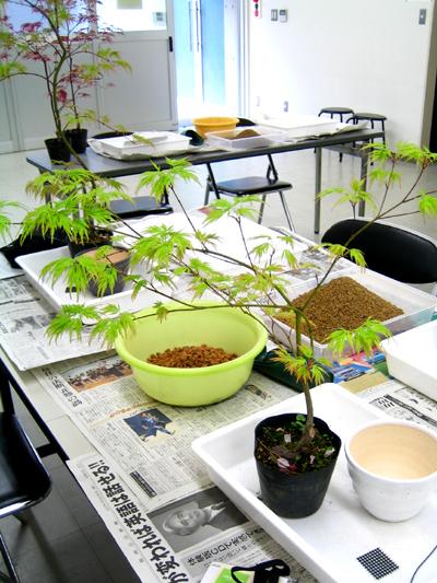 盆栽教室 2回目_d0028499_20145284.jpg