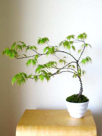 盆栽教室 2回目_d0028499_2029493.jpg