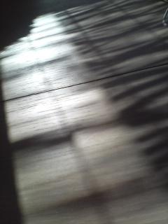 d0116299_154742.jpg