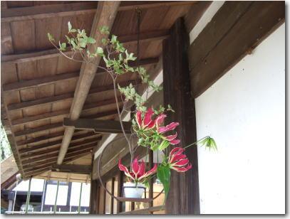 4月20日入口の花