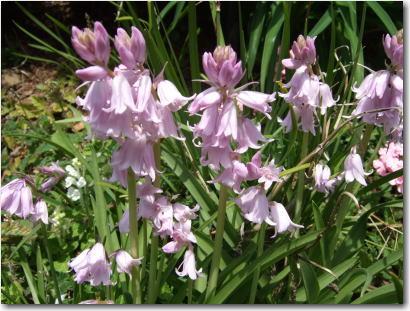 4月20日珍しい花