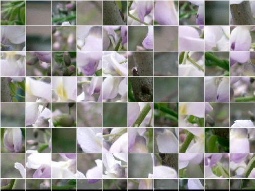 f0031546_1985399.jpg