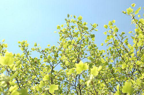 新緑_e0000951_2055862.jpg