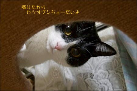 d0005397_10313725.jpg