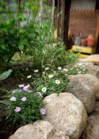 ただいま。春のお庭とクローバーとバラと大好きな父と・・・_d0077603_12294715.jpg