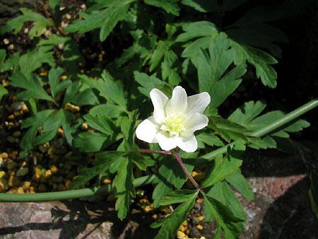 開花!!小さな白い花_d0080906_10391727.jpg