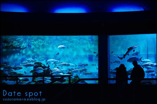 水族館デート_f0100215_021674.jpg