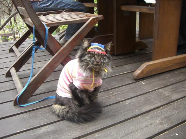 お洒落さんな猫のメイ君_f0111415_1810039.jpg