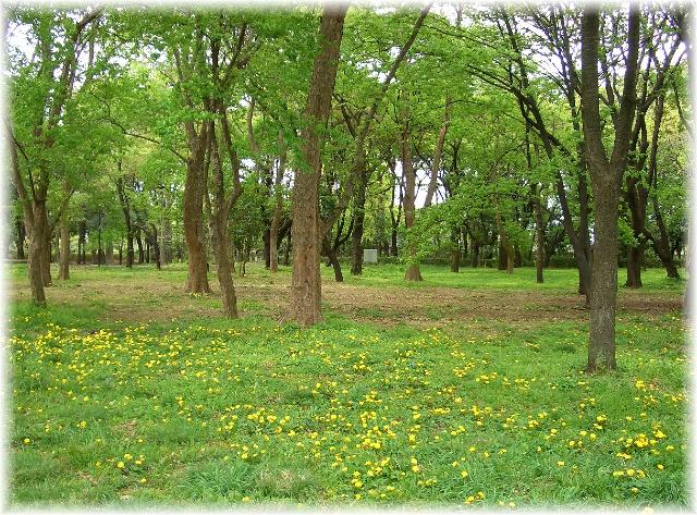 fresh green season_d0083623_19584747.jpg