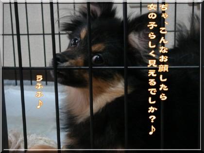 b0078073_1943251.jpg