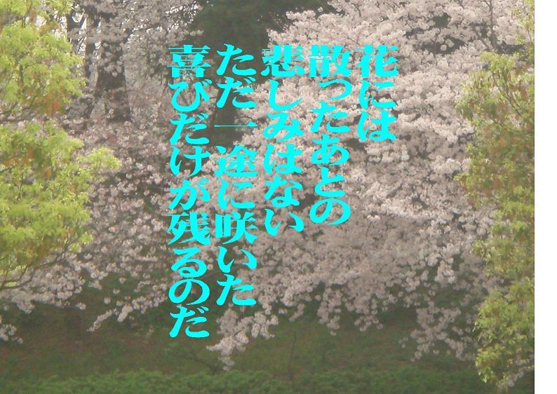 e0078900_1232318.jpg
