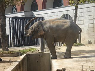 よこはま動物園 ズーラシア_c0025217_23174227.jpg