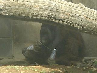 よこはま動物園 ズーラシア_c0025217_23192813.jpg
