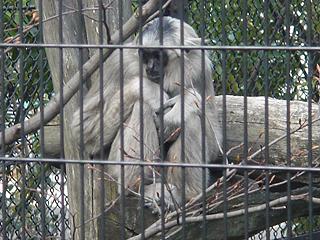 よこはま動物園 ズーラシア_c0025217_23201179.jpg