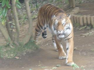 よこはま動物園 ズーラシア_c0025217_23211837.jpg