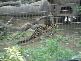 よこはま動物園 ズーラシア_c0025217_23214974.jpg