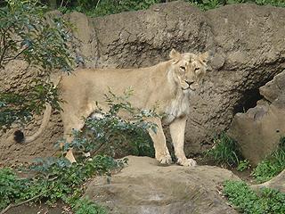 よこはま動物園 ズーラシア_c0025217_23222237.jpg