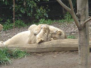 よこはま動物園 ズーラシア_c0025217_2324653.jpg