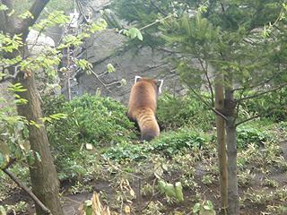 よこはま動物園 ズーラシア_c0025217_2343038.jpg