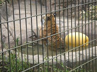 よこはま動物園 ズーラシア_c0025217_23434423.jpg