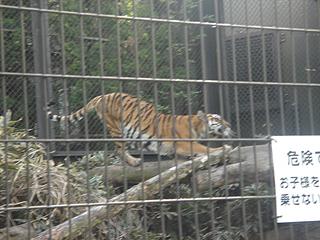 よこはま動物園 ズーラシア_c0025217_2343533.jpg