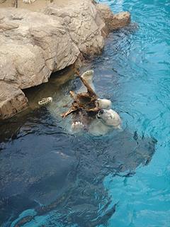 よこはま動物園 ズーラシア_c0025217_23574487.jpg