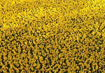 水仙の花が満開ですよ。_d0102327_15345837.jpg