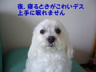 f0005727_16162974.jpg
