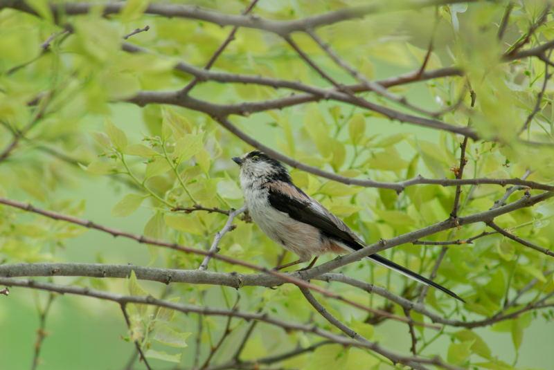 夏鳥や~い_b0036743_17561436.jpg