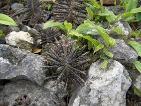 竹富島の植物 4月 2007年_a0099744_20421688.jpg