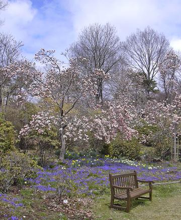 4月22日 春の赤城自然園 セゾンガーデン_a0001354_19484354.jpg