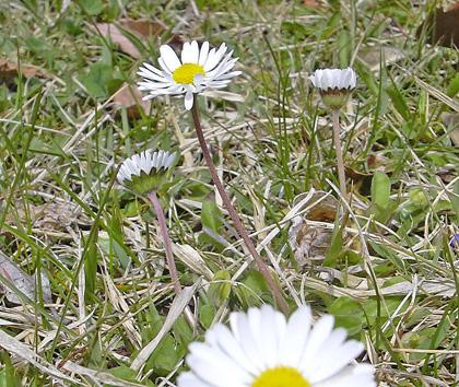 4月22日 春の赤城自然園 セゾンガーデン_a0001354_19515962.jpg