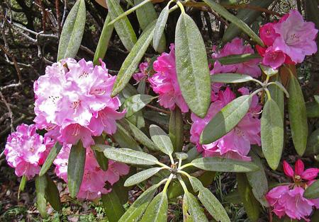 4月22日 春の赤城自然園 セゾンガーデン_a0001354_19522112.jpg