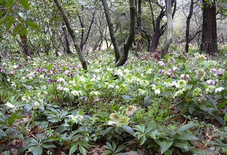 4月22日 春の赤城自然園 セゾンガーデン_a0001354_19523862.jpg