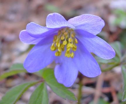 4月22日 春の赤城自然園 セゾンガーデン_a0001354_1954066.jpg