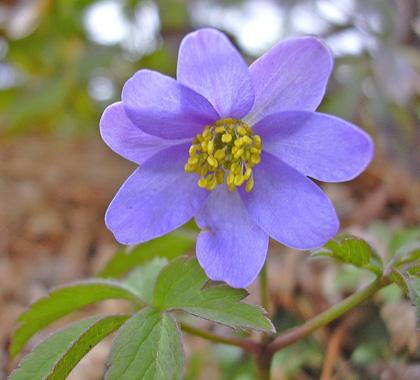 4月22日 春の赤城自然園 セゾンガーデン_a0001354_19541790.jpg