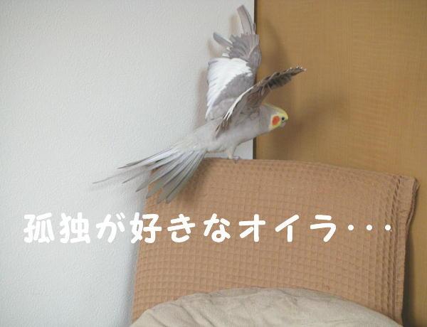 f0132055_0144473.jpg