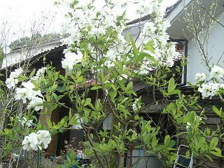 4月の庭_d0087595_7422822.jpg