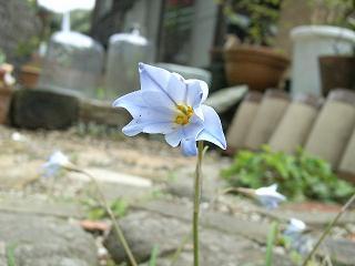 4月の庭_d0087595_7441266.jpg